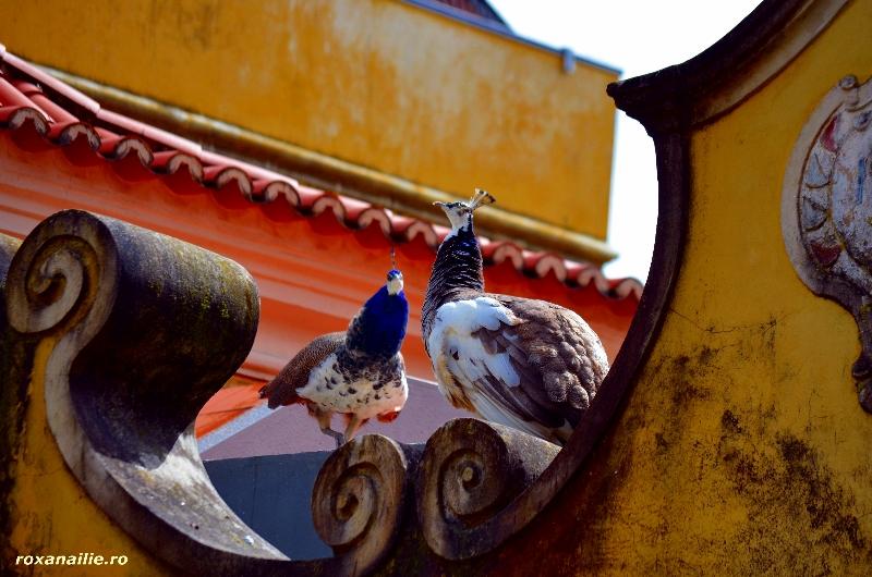 Panorama_Lisabonei_galerie_26.jpg