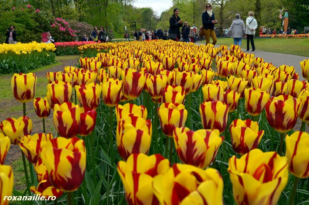 Soiurile multicolore care au generat tulipmania secolului XVII