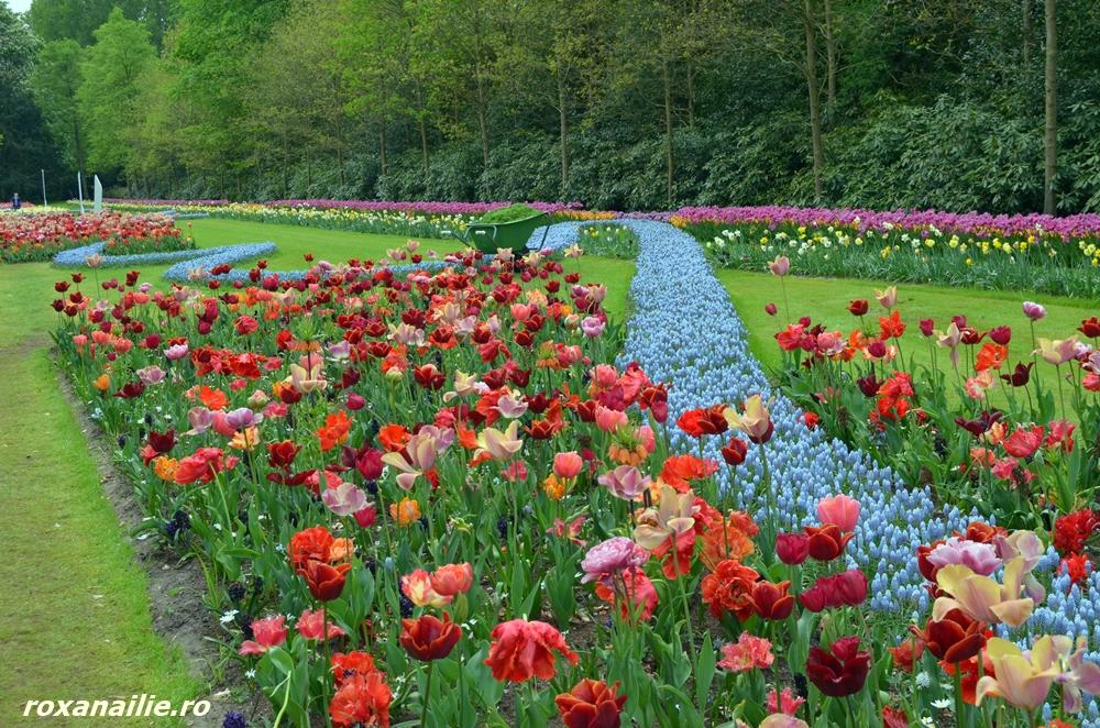 O spontaneitate riguroasă a lalelelor cu florile de câmp
