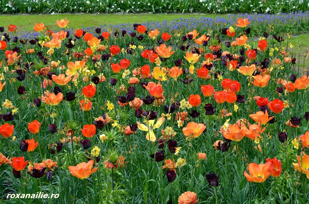 O mare relaxare de culori, soiuri, flori