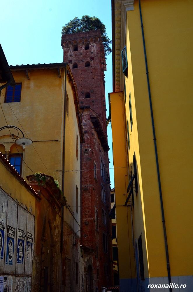 Torre Guinigi și ai săi stejari din vârf