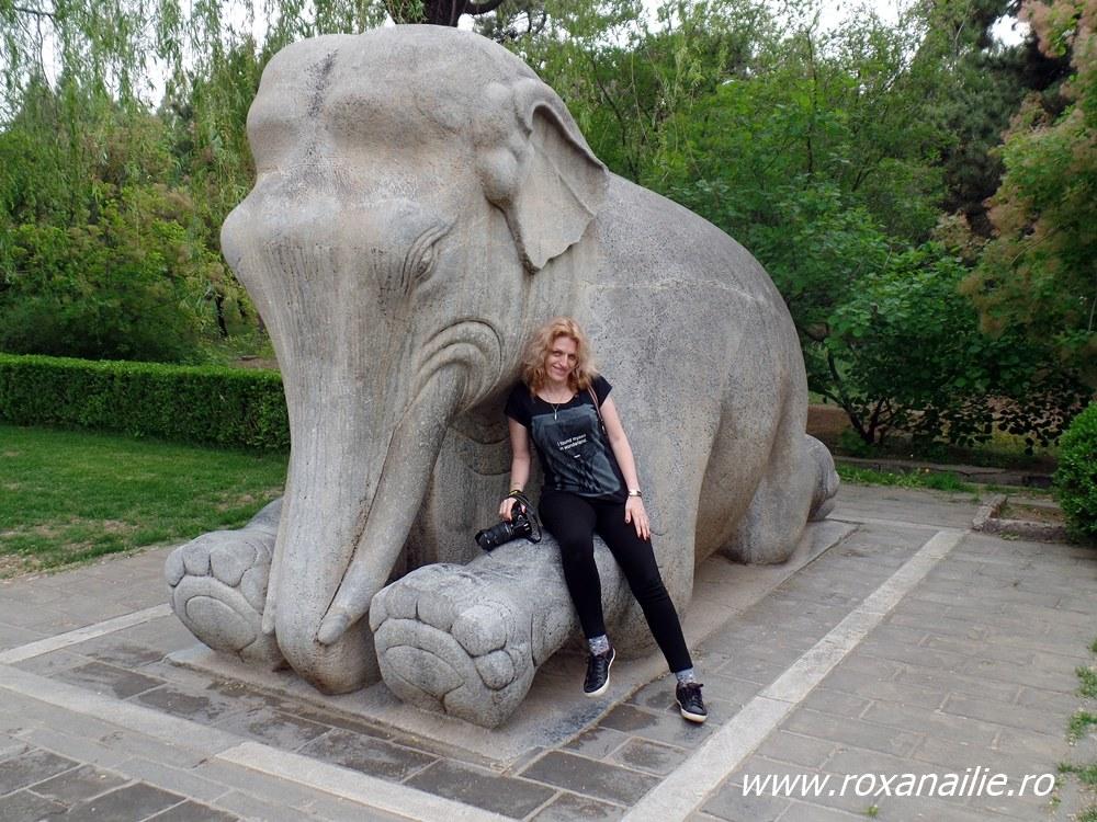 Cam asa si-au imaginat chinezii elefantul, cu genunchii flexati invers :)
