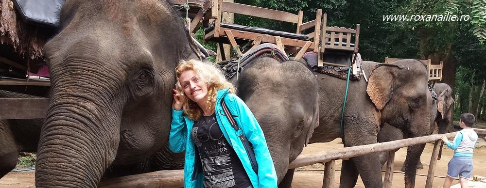 Cu elefanții mei dragi