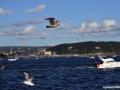 In_Oslo_fericirea_12.jpg
